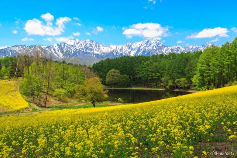 中山高原の菜の花と北アルプス